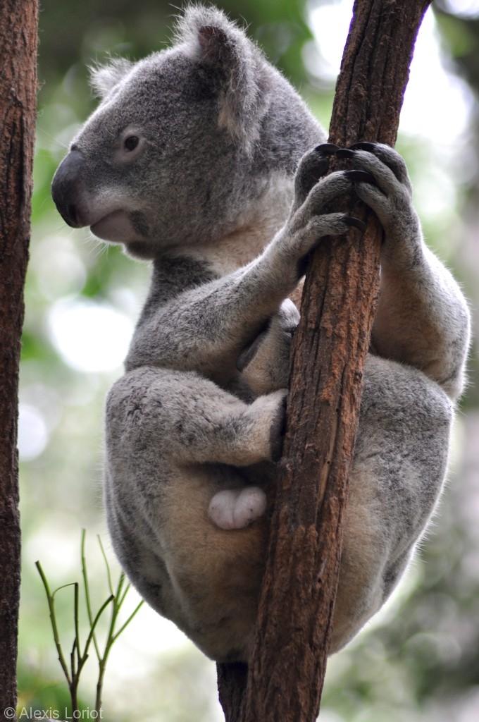 AlexisLoriot_Australie_4