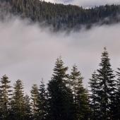 Vancouver-nature_alexisloriot_9