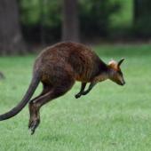 AlexisLoriot_Australie_2