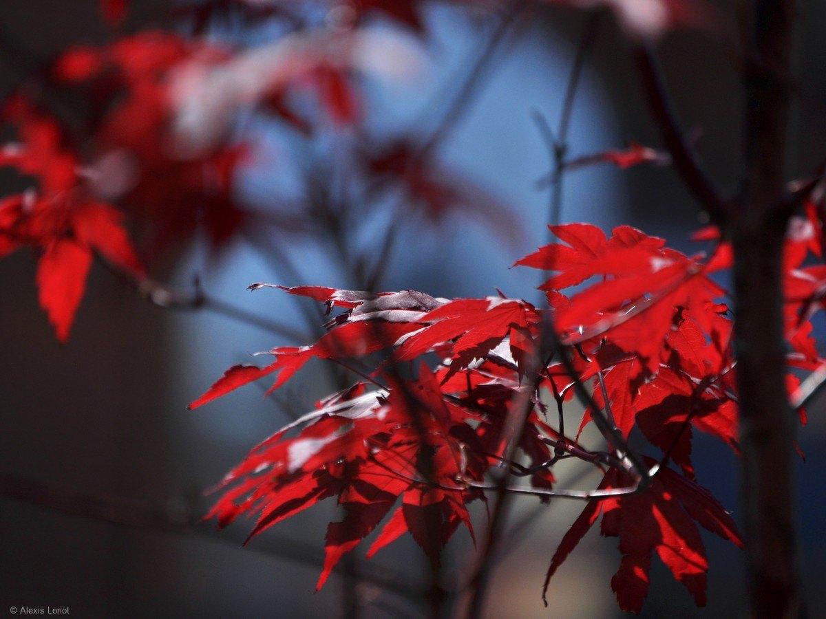 Vancouver-nature_alexisloriot_23