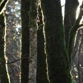 Vancouver-nature_alexisloriot_2